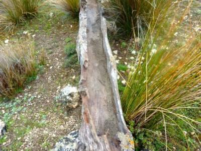 Parque Natural Cazorla-Sistema Prebético; bosque de oma pedrezuela laguna de gallocanta
